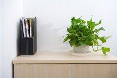 办公室植物摆