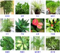 办公室绿色植物摆放技巧及作用